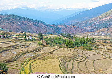 Terraced farmaland, Paro, Bhutan Agriculture has a dominant...