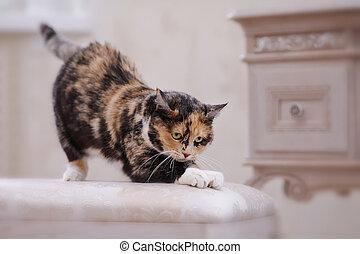 The multi-colored domestic cat