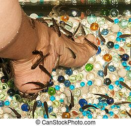 pedicure by garra rufa fish Spa procedure