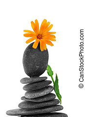 zen stones and flower on a white background
