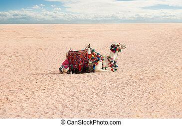 Camel rest in desert