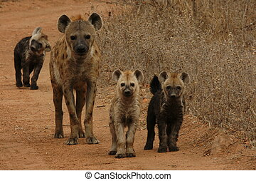 Hyena Family - Wait for the other to catch up.