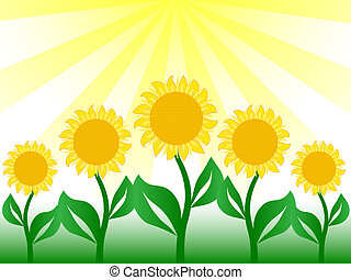 nice sunflower in vector image