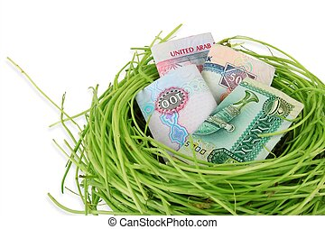 UAE money dirhams in a nest - UAE currency dirhams in a nest