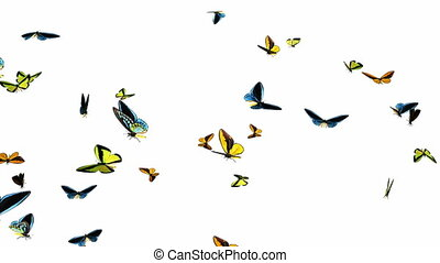 Looping Butterflies Fast Swarm Animation 1. With Alpha Mask,...