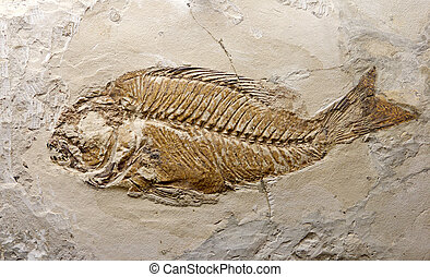 fossil fish - reliquiae fish printed on stone