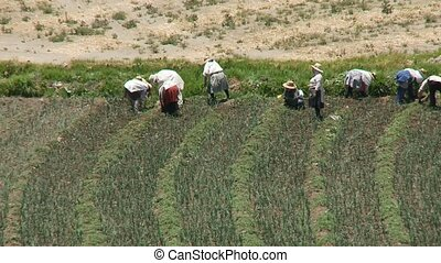 Agriculture, South America