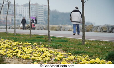 People park green yellow flowers - People walking at...