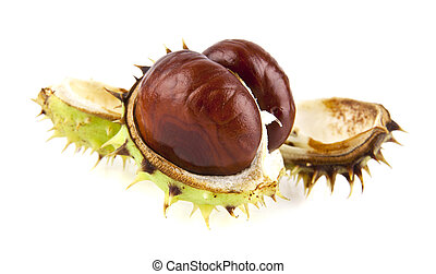 chestnut - a chestnut is isolated on a white background
