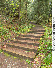 Wooden Steps - Wooden steps wind uphill along a forest path
