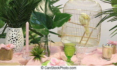 Domestic caged yellow budgie parrot. - Domestic caged yellow...