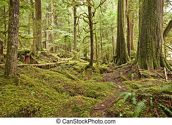Pacific Northwest Rain Forest - Frequent rainfall and...