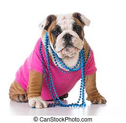 female bulldog puppy - female english bulldog puppy sitting...