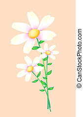 white wild flower - white flower on the pink background