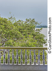 Tree with Birds at Guayas River in Guayaquil Ecuador -...