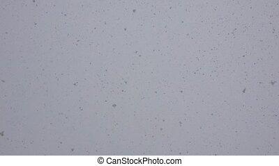 Falling snow at day