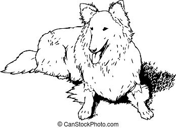 Collie Dog - an outline of a purebred collie