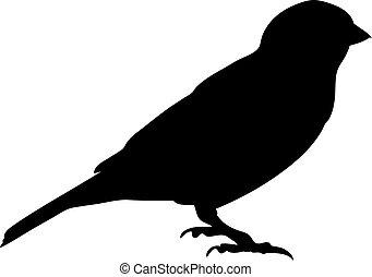 Blackbird - a silhouette of a blackbird on a branch