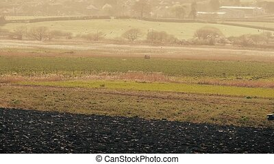 Tractor Plows Field With Birds - Farmer drives his tractor...