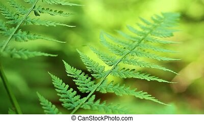 Bug On Fern - Tiny insect crawls up and down fern, shallow...