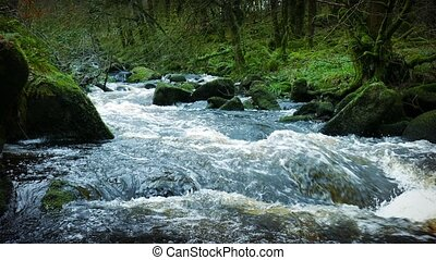 Big River In Ancient Forest - Heavy flowing river through an...
