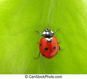ladybird - Macro shot of a ladybird bug sitting on a green...