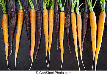 Baby Carrots in a Row Horizontal Top View