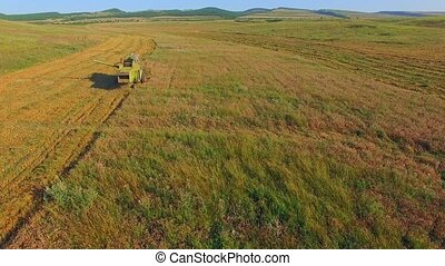 AERIAL VIEW Combine Harvester Cutting Field - AERIAL VIEW...