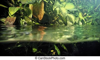 Exotic Plants Going Below Waterline - View of plants above...