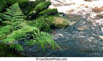 Ferns By River - Ferns growing by the side of a river