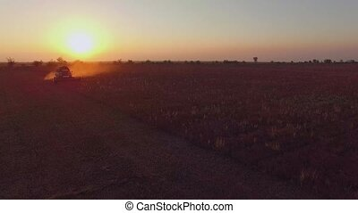 AERIAL VIEW. Farm Combine Harvesting Buckwheat At Sunset