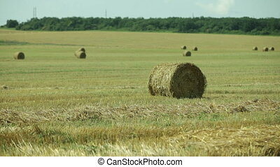sheaves of hay in a field