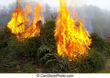 Outdoor burning fire and open flame on Fir Trees