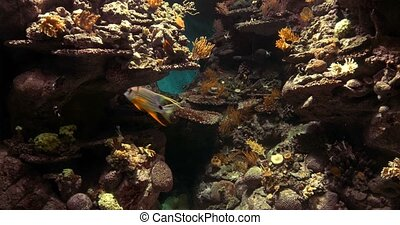4K, Colorful Fishes, Marine Life, Underwater World