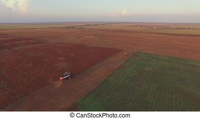 AERIAL VIEW Rural Combine Harvesting At Buckwheat Field -...