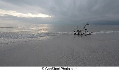 Cloudy Day on the Beach - Fallen Tree Dark Clouds over the...