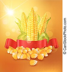 vector background with grains and cobs of corn and red...