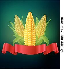 vector background with  cobs of corn and red ribbon