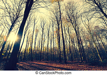 Trees without leaves in the forest at autumn