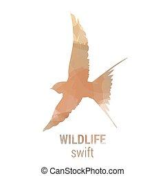Wildlife banner - bird swift - Wildlife banner on white...
