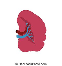 Spleen icon flat - Spleen icon in flat style isolated on...