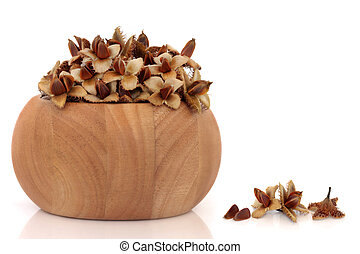 Beech Nuts - Beech nuts in a beech wood bowl and scattered,...