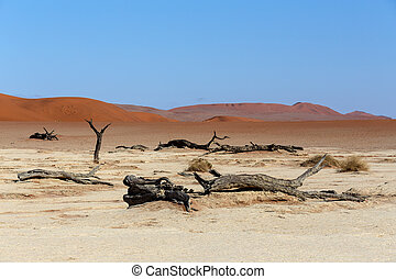 Hidden Vlei in Namib desert - beautiful sunrise landscape of...
