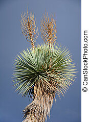 Blooming of different cactus with yucca in desert - Blooming...
