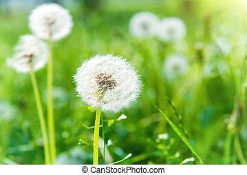 Photos de tr fle fleurs blanches vert lawn white for Pelouse tarif
