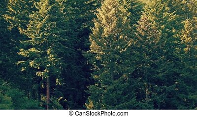 Forest With Insects And Pollen - Summer afternoon in the...