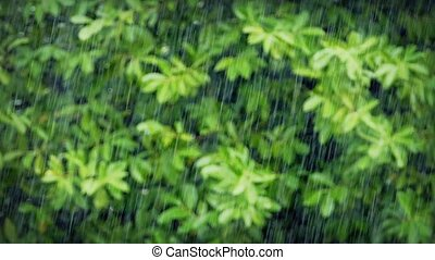 Heavy Rain In Focus With Plants - Rainfall with drops in...