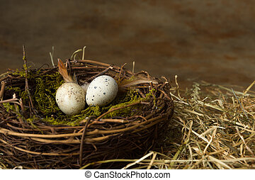 Small eggs in nest
