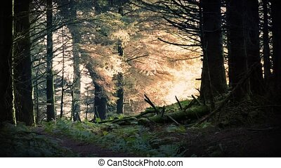Magical Sunrise In The Forest - Morning sunlight breaks...