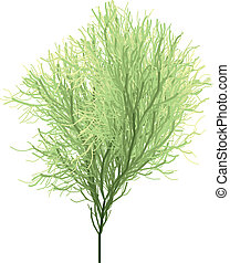 spring tree - bushy green tree, vector